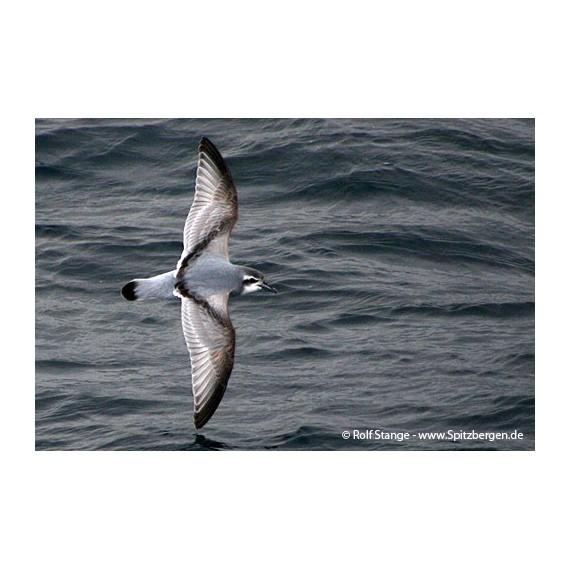 Die Nebel der Zeit: Die Lebensgeschichte von Cymba, dem Albatros aus Südgeorgien