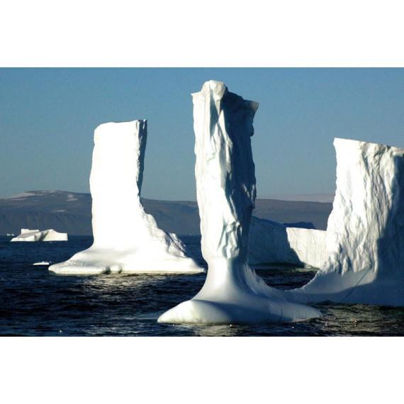 Grönland - Ein kleiner Pflanzenführer