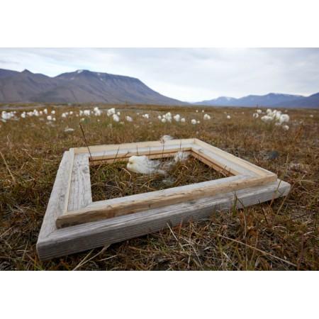 Spitzbergen-Treibholz-Bilderrahmen 2020