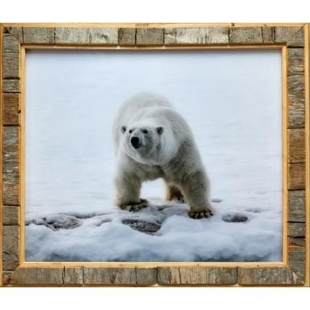 Fotodruck im Treibholz-Bilderrahmen: Eisbär im Hornsund