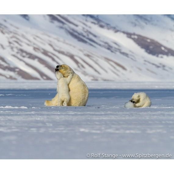 Fotodruck mit Treibholz-Bilderrahmen: Eisbärenfamilie im Tempelfjord
