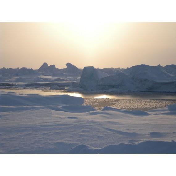 Online-Vortrag von Birgit Lutz, 17.2.: Ice is nice - die Entstehung von Meereis und seine Bedeutung für das globale Ökosystem