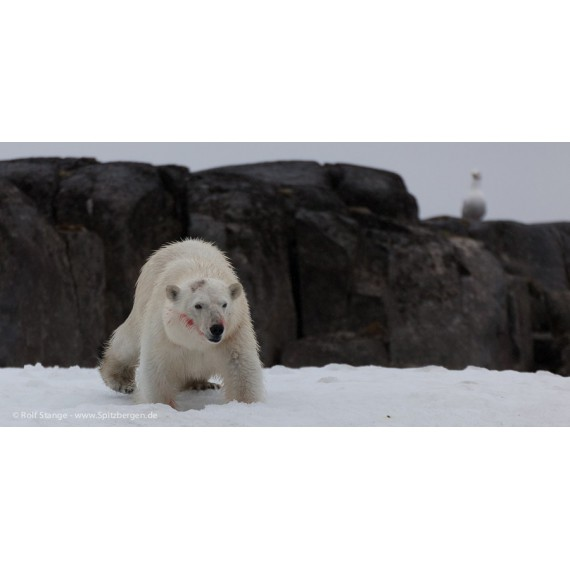 Spitzbergen – Kalte Schönheit – Das Fotobuch