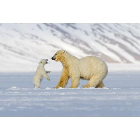 """Online-Vortrag """"Der arktische Mittwoch: arktische Tierwelt (I) - Rentier und Eisbär"""
