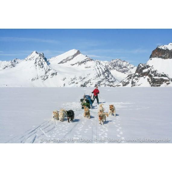 Scoresbysund Hot Dogs – Hundeschlittenfahrten auf der Rückseite von Grönland