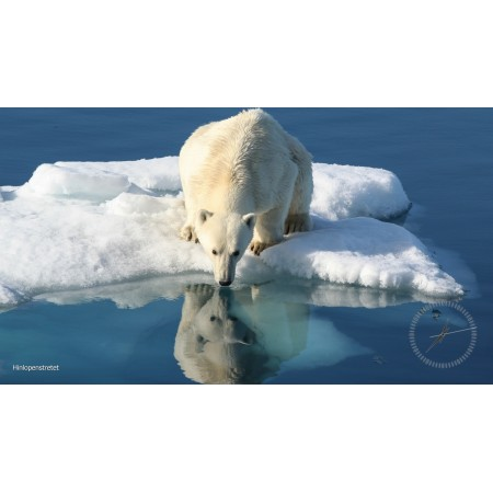 Screensaver: Spitsbergen's polar bears