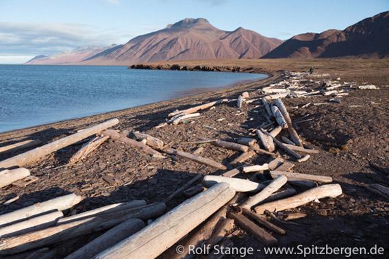 Treibholz am Wigdehlpynten – Woodfjord, Spitzbergen